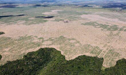 Las alertas de deforestación en Brasil han crecido 80% en los últimos dos años, informa Inpe