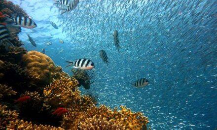 Los arrecifes de coral más antiguos del Mediterráneo empezaron a formarse hace 400.000 años