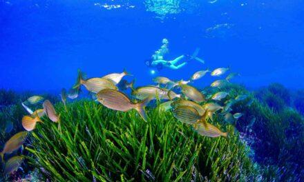 La Comunidad promociona la marca Costa Cálida como destino de buceo en el litoral Mediterráneo