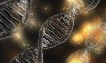 Se destinarán 34 MILLONES DE EUROS para prorrogar los contratos de investigadores afectados por la pandemia