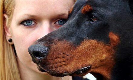El Gobierno suscribe diferentes acuerdos para mejorar la concienciación sobre tenencia responsable de animales de compañía