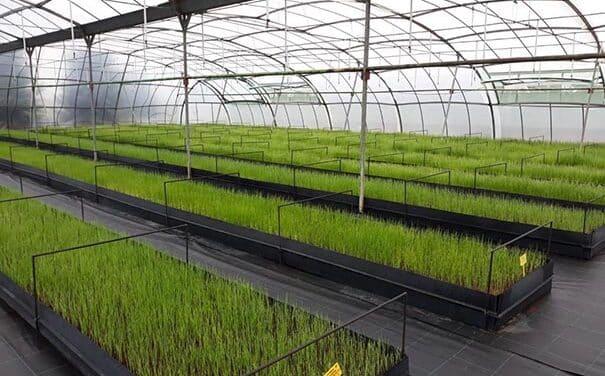 La Comunidad de Madrid ofrece a los agricultores 500.000 plantones de variedades hortícolas autóctonas