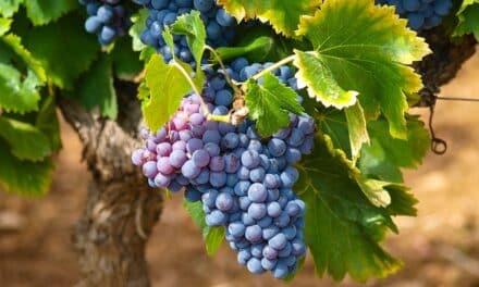 El Gobierno regional manifiesta su satisfacción por la retirada temporal de los aranceles del 25% a productos agroalimentarios como el vino, aceite o queso manchego impuestos por EEUU