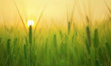 El Gobierno reactiva con las comunidades autónomas los protocolos para coordinar y preparar las campañas agrícolas