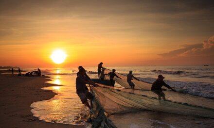 Agricultura, Pesca y Alimentación destina 40 millones de euros para ayudas a inversiones de las Entidades Asociativas Prioritarias